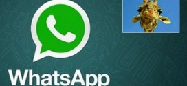Whatsapp e la giraffa: Soluzione all'indovinello